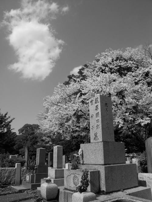 Sakura_ka_kumo_ka_85