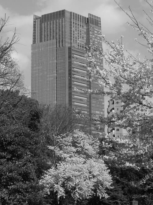 Sakura_midtown_105
